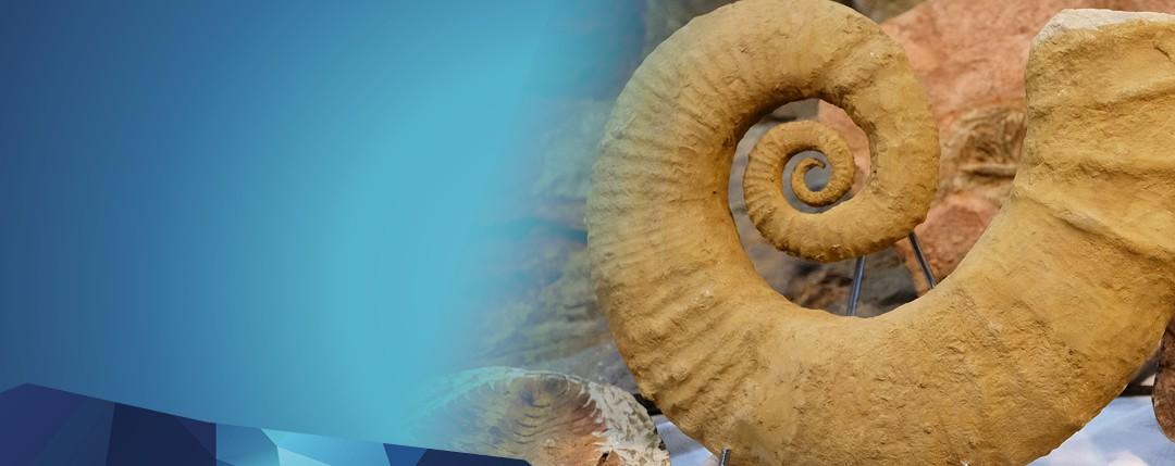 Slide-fossili-en