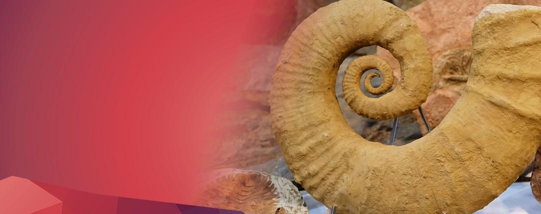 Slide fossili